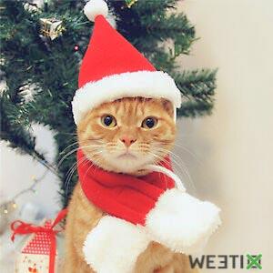 Déguisement de Noël pour chat et chaton