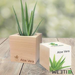 Kit pour faire pousser votre Aloe Vera