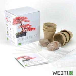 Kit pour faire pousser son bonsaï à la maison