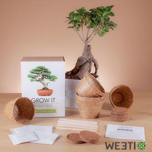 Kit pour faire pousser son bonsaï - Grow it