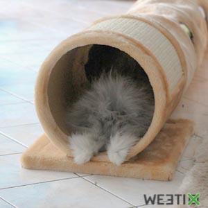 Tunnel de jeu pour lapin